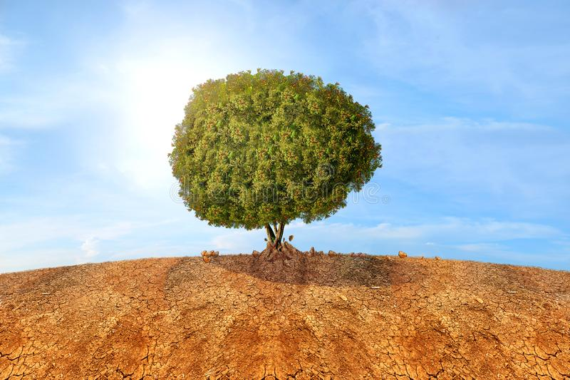 Trees grown from dried cracked soil stock image