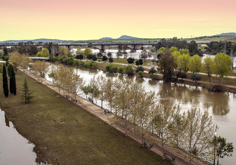 Trees on Guadiana river royalty free stock photo
