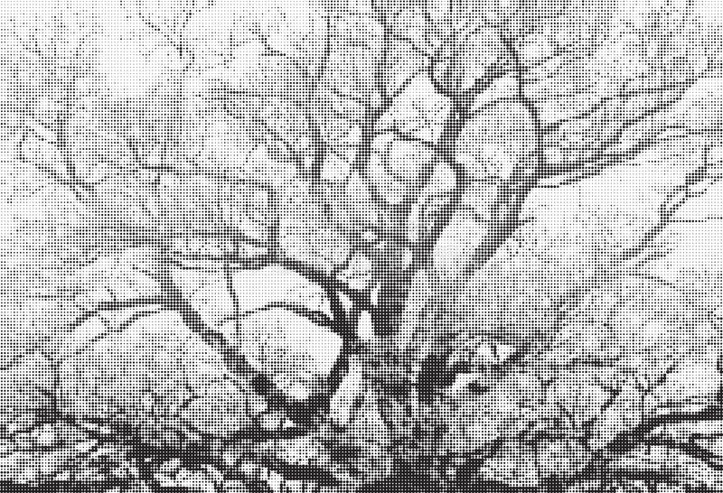Trees halftone black and white illustration royalty free stock photography