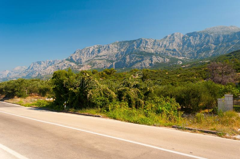 Trees with high croatian mountain Biokovo in background royalty free stock photography