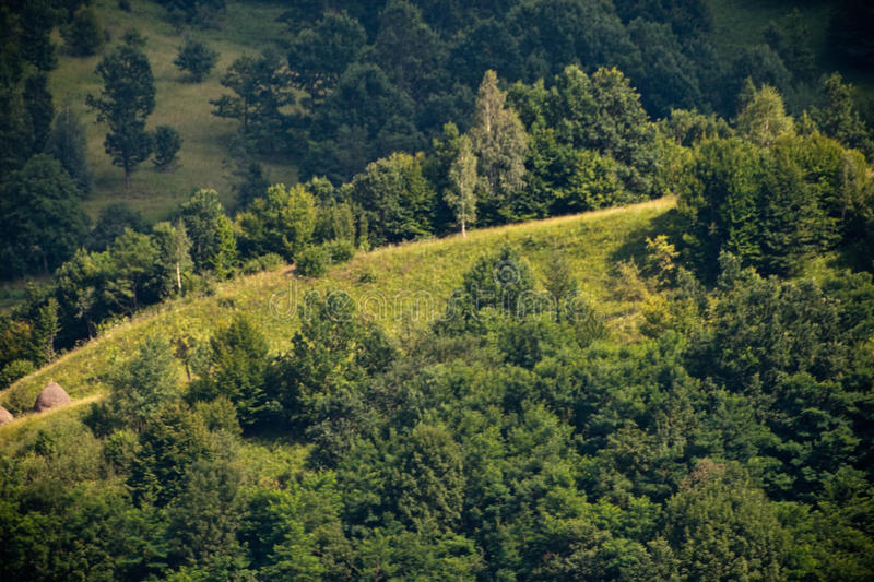 Download Trees on a hill stock image. Image of mountain, detail - 15257011