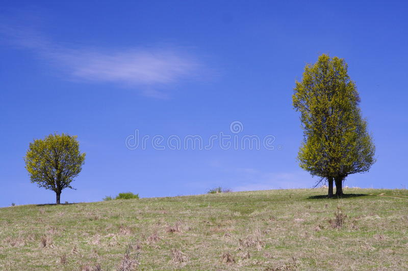 Download Trees, hill and blue sky stock photo. Image of hill, meadow - 19388106