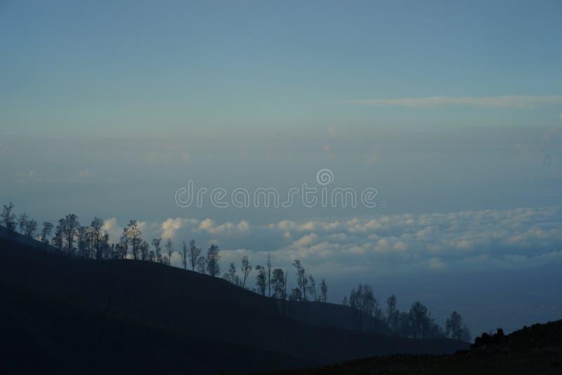 Trees on hill. stock photos