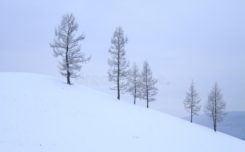 Trees on hill, winter stock images