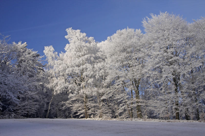 Trees with hoarfrost, Lower Saxony, Germany. Trees with hoarfrost, Georgsmarienhuette, Lower Saxony, Germany, in winter royalty free stock image