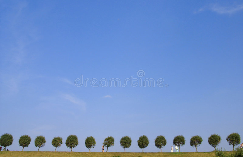 Trees on horizon. Exactly planted trees against the sky royalty free stock image