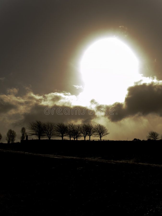 Free Trees Horizon Silhouette At Sunrise Royalty Free Stock Photos - 6548698