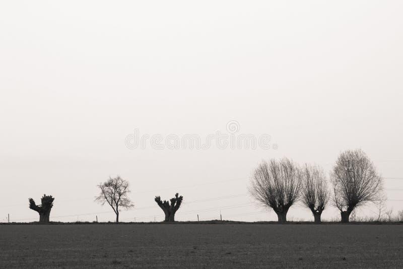 Trees on horizont. Black and white photo of trees on horizont stock images