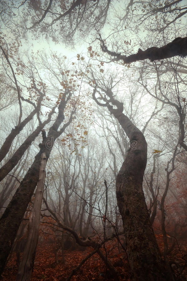 Trees i dimman royaltyfri bild