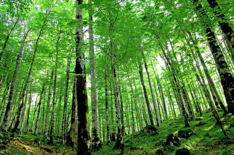 Trees i en skog arkivfoton