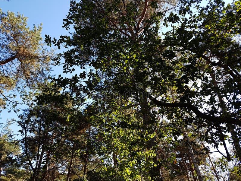 Trees i en skog royaltyfria foton