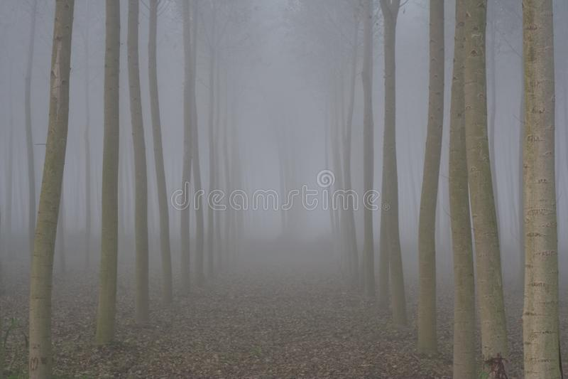 Trees i misten royaltyfri foto