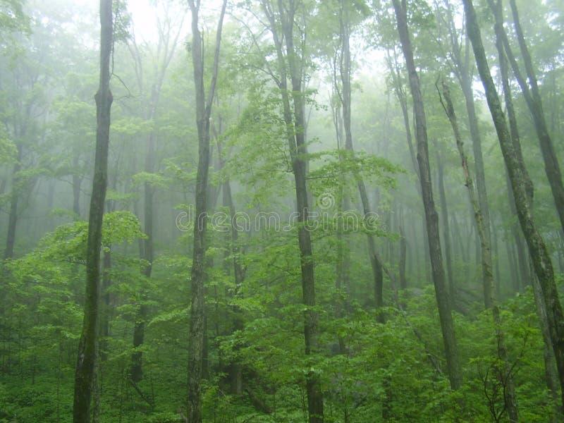 Trees i misten fotografering för bildbyråer