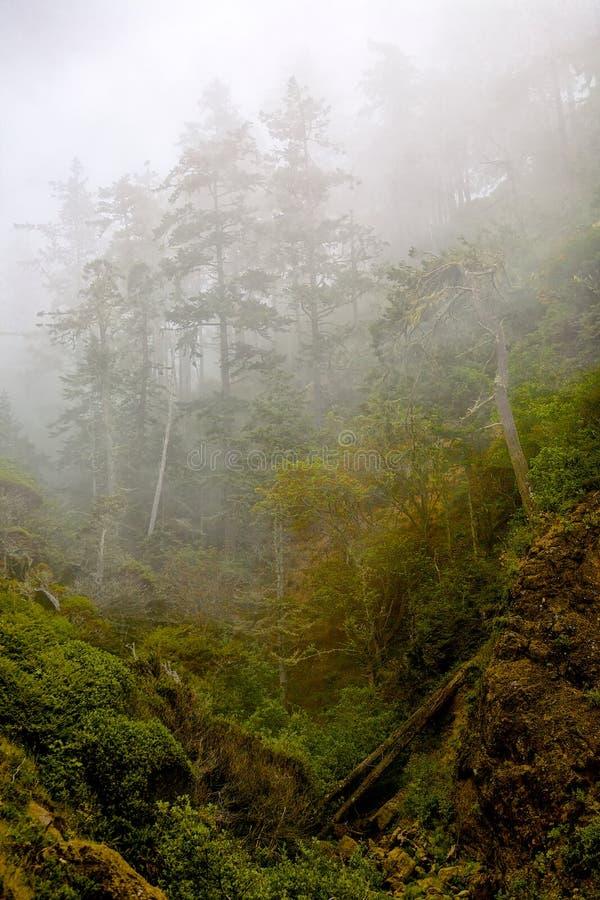 Trees i misten arkivbild