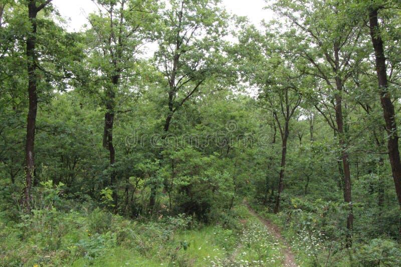 Trees i skogen arkivfoton