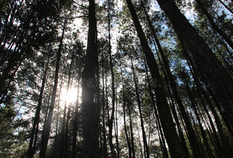 Trees i skogen royaltyfri bild