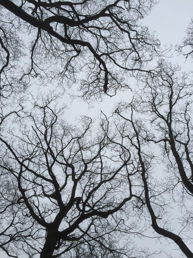 Trees i vinter arkivfoton
