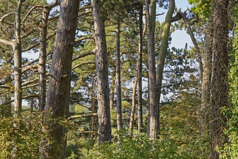 Download Trees stock photo. Image of autumn, garden, hidden, hojas - 65480002