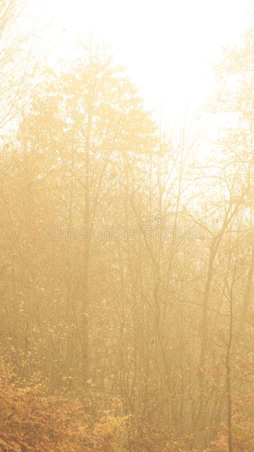 Free Trees In Autumn Park Foggy Day Stock Photos - 52527573