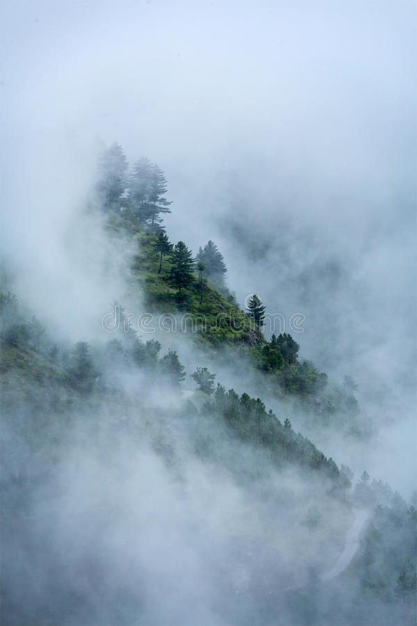Free Trees In Clouds Stock Photography - 30862602