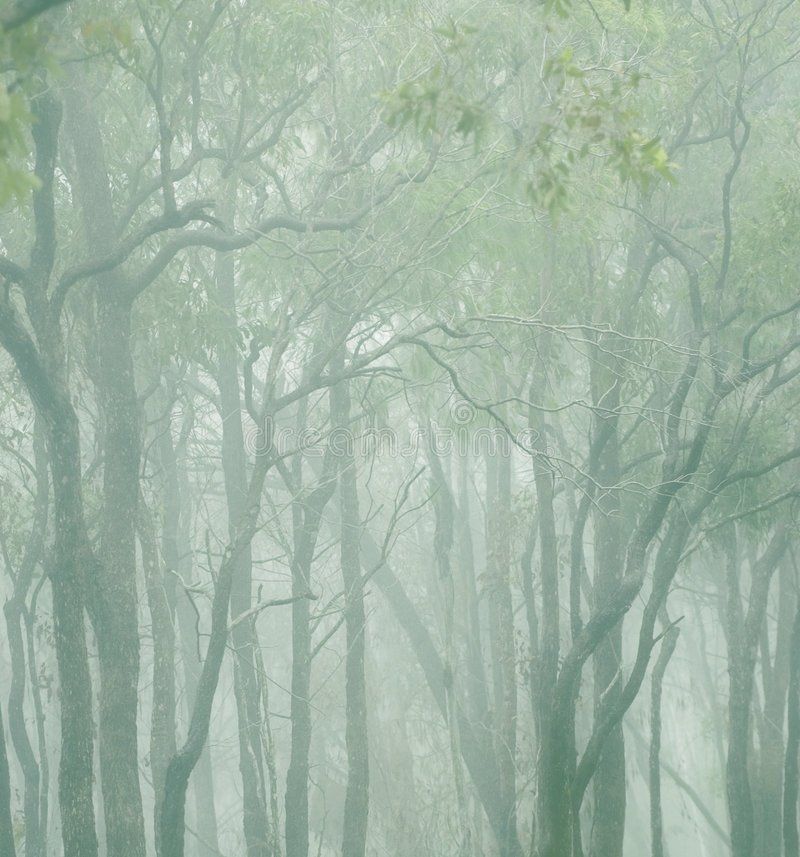Free Trees In The Clouds Stock Image - 2169121