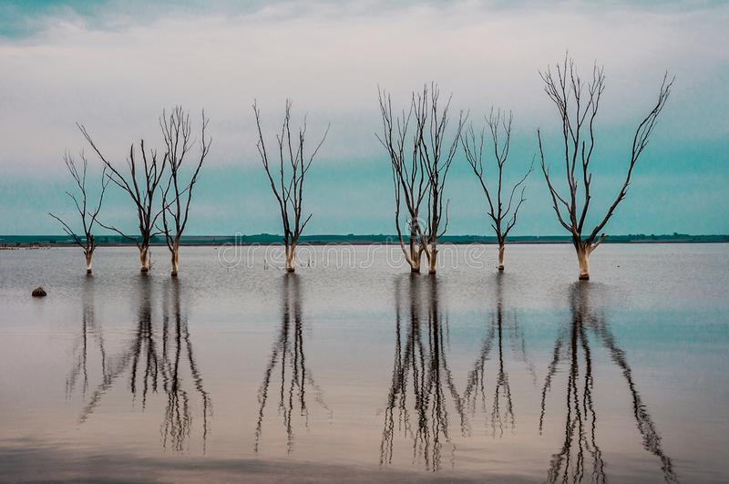 Trees inside a lake reflected in the water royalty free stock images