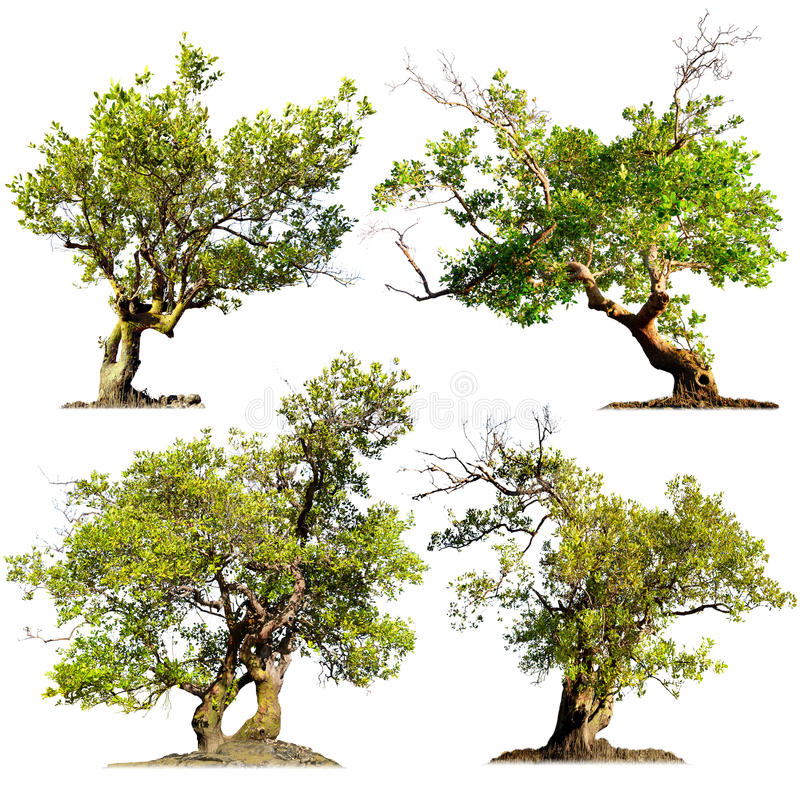 Free Trees Isolated On White Background. Green Nature Plants Stock Photos - 34358103