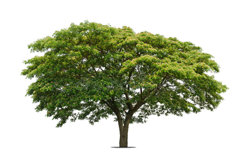 Trees isolated on white royalty free stock images