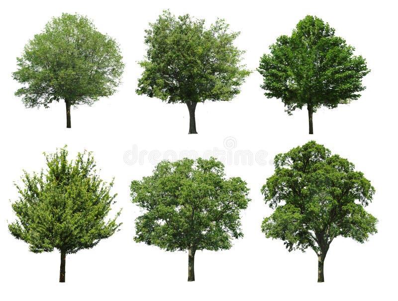 Trees isolated on white background stock image