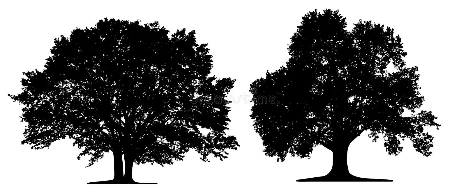 Trees isoleted. On white background stock illustration