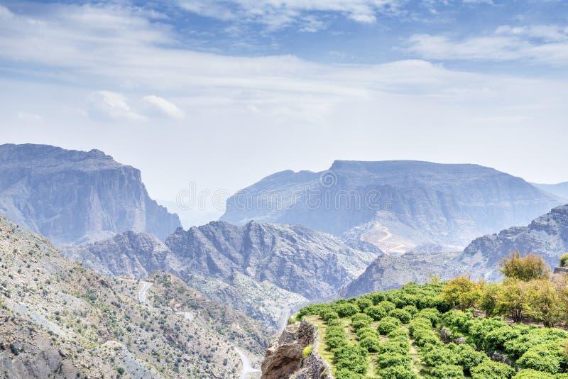 Trees Jebel Akhdar Oman stock image