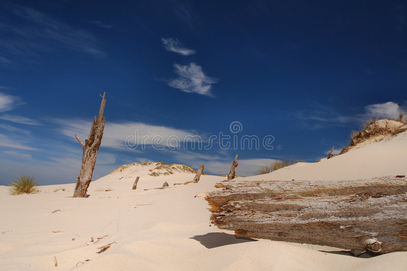 Download Trees Killed By Moving Dunes Stock Photo - Image: 6908648