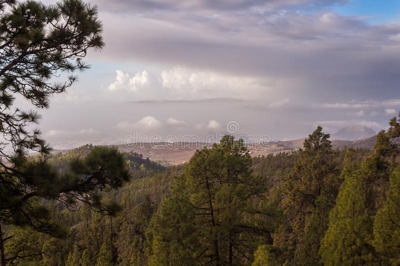 Trees and La Gomera Island. Trees on the hills of the Teide National Park. View on the coast of the island. Another island La Gomera on the horizon, among the stock images