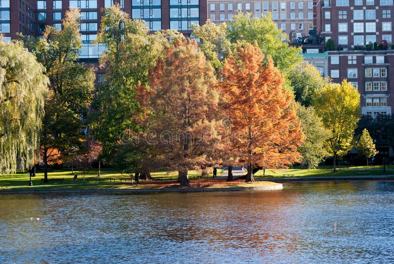 Trees on the lake stock photography