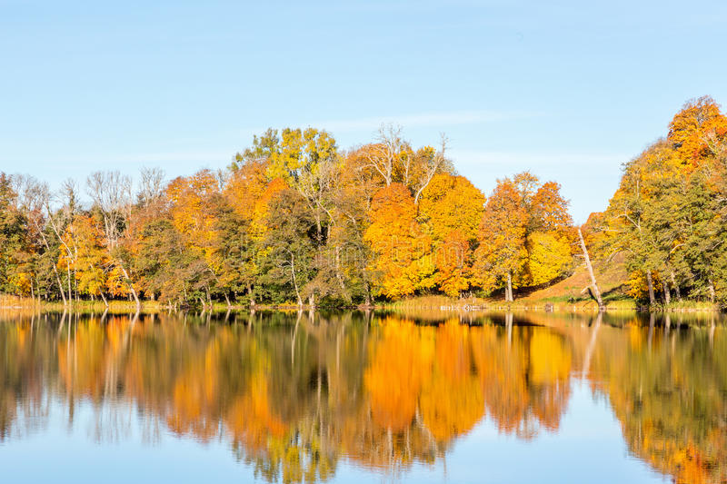 Trees by the lake in the autumn stock photos