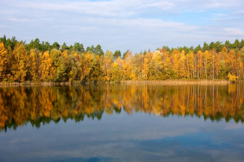 Trees at lake in fall stock photo