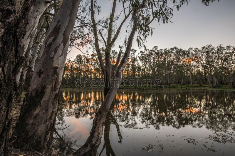 Trees in Lake Mulwala Australia. Lake Mulwala was formed by damming the Murray and flooding the adjacent countryside. Flooded trees have subsequently died stock images