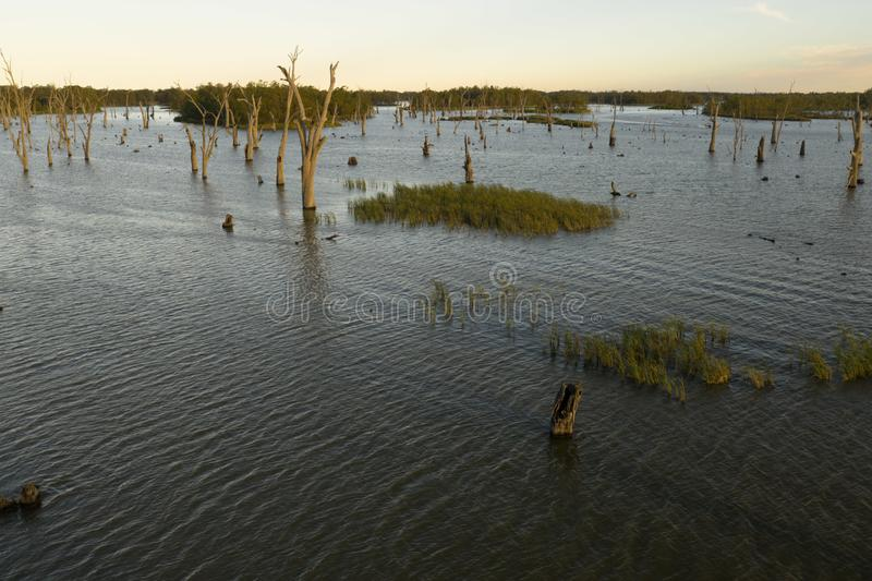Trees in Lake Mulwala Australia. Lake Mulwala was formed by damming the Murray and flooding the adjacent countryside. Flooded trees have subsequently died royalty free stock images