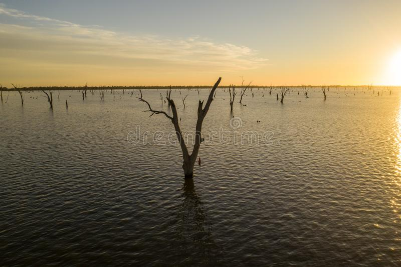 Trees in Lake Mulwala Australia. Lake Mulwala was formed by damming the Murray and flooding the adjacent countryside. Flooded trees have subsequently died stock image
