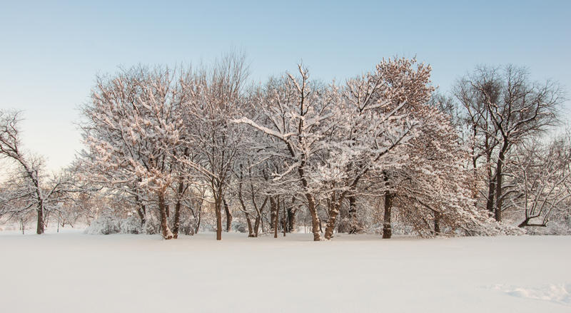 Trees landscape at the winter in park stock image