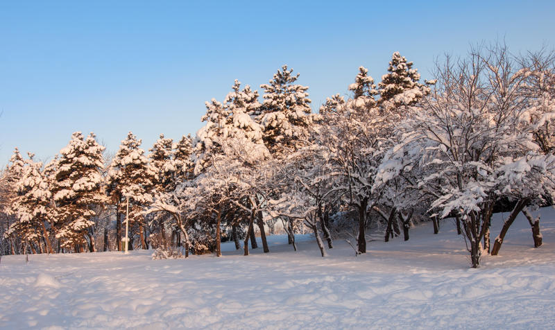 Trees landscape at the winter in park stock photography