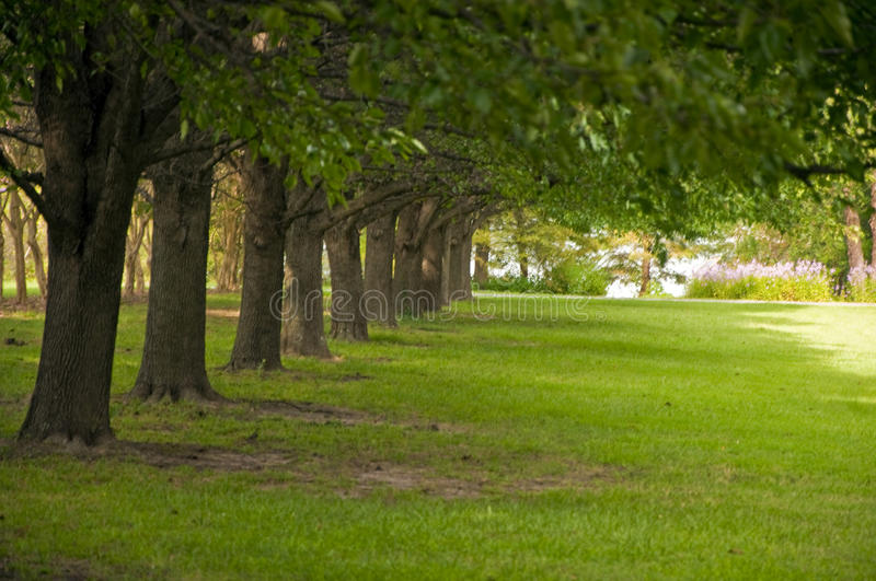 Download Trees and Lawn stock photo. Image of forest, arboretum - 10848160