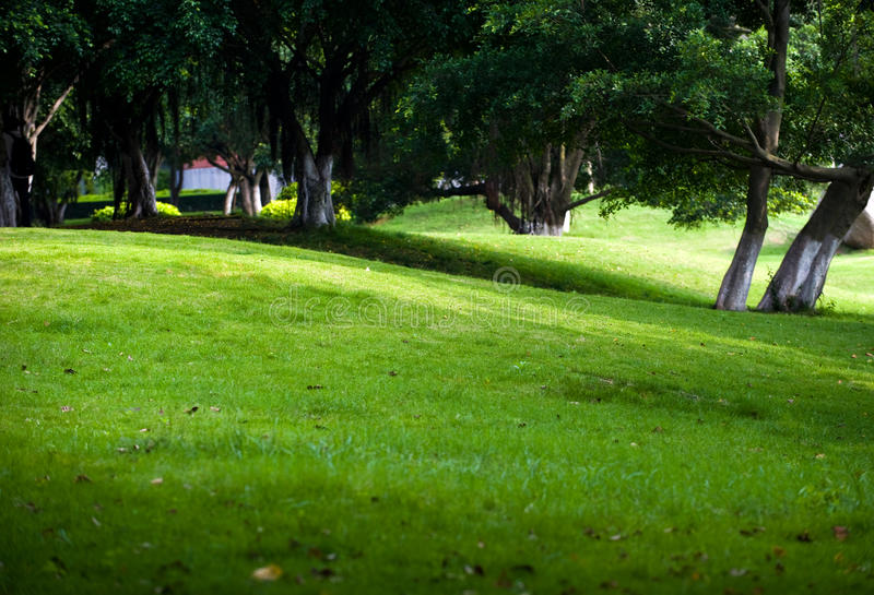 Download Trees and lawn stock image. Image of beautiful, places - 14473713