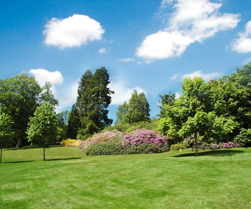 Trees and lawn royalty free stock photo