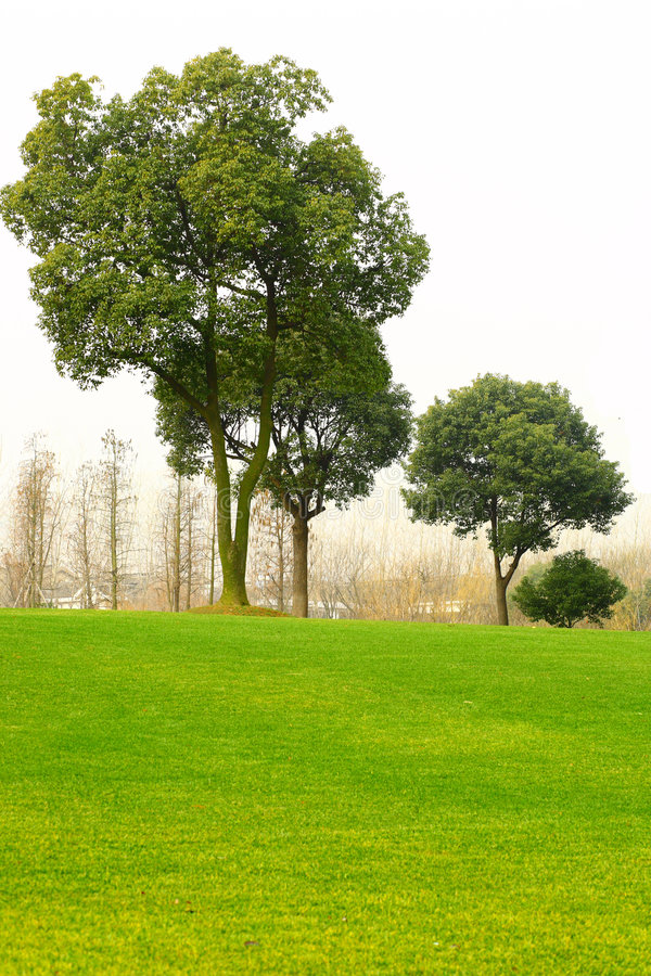 Trees and lawn stock photography