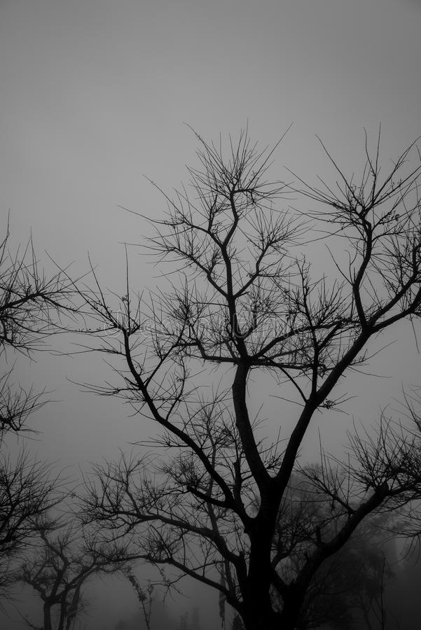 Trees without leaf in the dark mist. stock photos