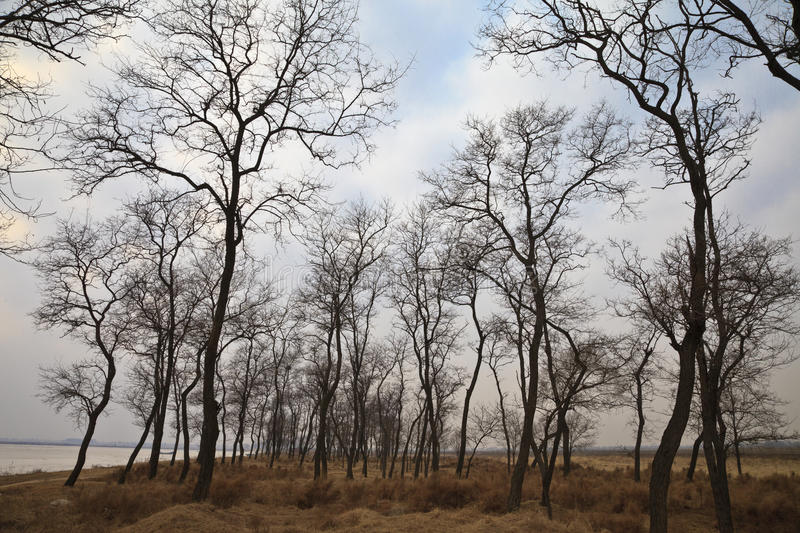 Download Trees Without Leaves Royalty Free Stock Images - Image: 23414059