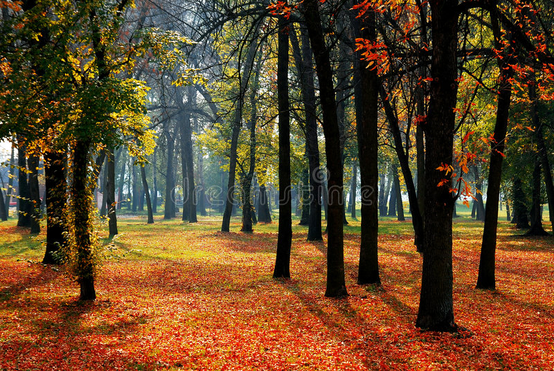 Download Trees and leaves stock image. Image of environment, carpet - 4594167