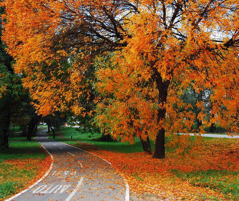 Download Trees and leaves stock photo. Image of colorful, autumn - 4594280