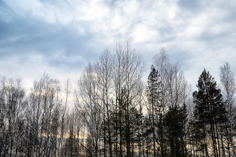 Trees without leaves against the cloudy sky in winter or early spring. Ssad landscape. Trees without leaves against the cloudy sky in winter or early spring royalty free stock image